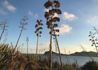 Playa de los Genoveses-Parque natural Cabo de Gata (3)